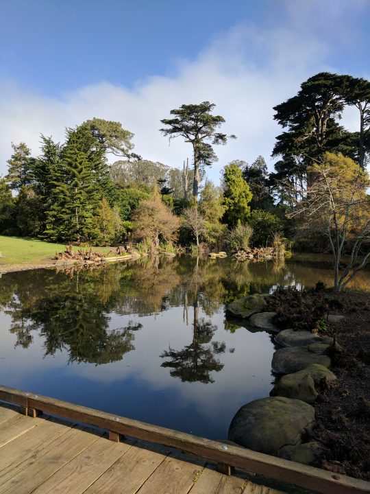 San Francisco Botanical Garden in Pictures