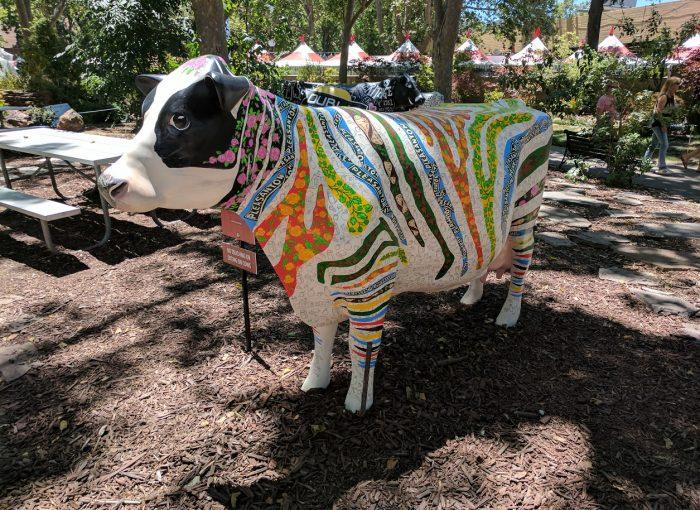 Alameda-county-fair-cows