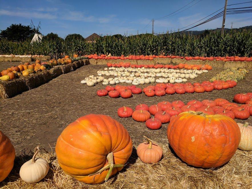 America's pumpkin spice obsession