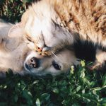 Thinking about bringing a #dog or #cat into #Australia from the US? Here's everything you need to know about the process