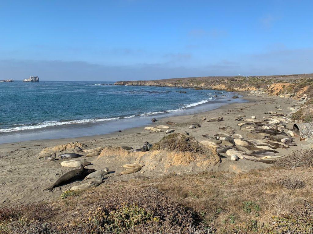 San Simeon Elephant Seal Rookery