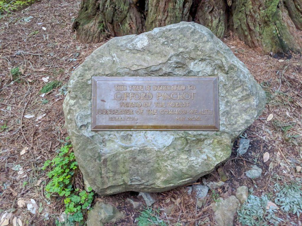 Gifford Pinchot Tree plaque in Muir Woods