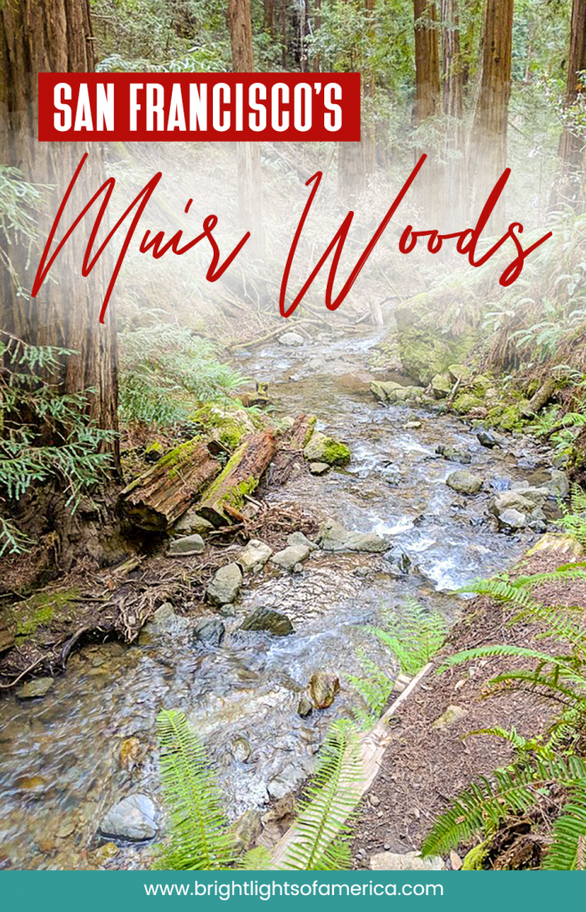 A guide to visiting Muir Woods and Redwood Trees in San Francisco