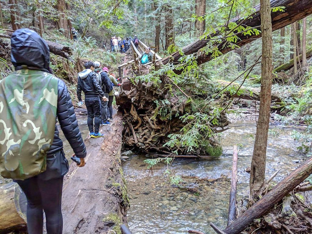 People crossing log bridge